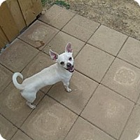Adopt A Pet :: Pablo - Gadsden, AL