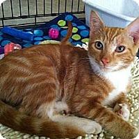 Adopt A Pet :: Rudy - Easley, SC