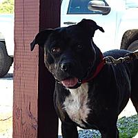 Adopt A Pet :: Argo - Chilhowie, VA