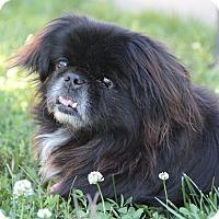 Adopt A Pet :: Pepper Ann - Richmond, VA