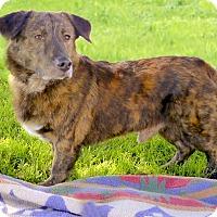 Adopt A Pet :: Rokkie real nature lover - Sacramento, CA