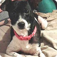 Adopt A Pet :: Annie Donut - Jacksonville, FL
