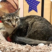 Adopt A Pet :: Summer - Foothill Ranch, CA