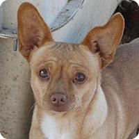 Adopt A Pet :: Chevy - Vacaville, CA