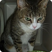 Adopt A Pet :: Jade - Hamburg, NY