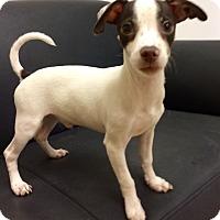 Adopt A Pet :: Mr. Bux - Mission Viejo, CA