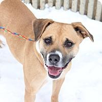 Adopt A Pet :: Candy - Greensboro, NC