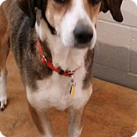 Adopt A Pet :: Addie - Lexington, KY