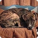 Adopt A Pet :: Prissy