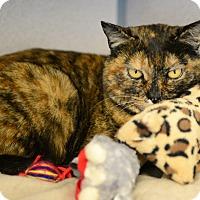 Adopt A Pet :: Terra - Gardnerville, NV