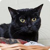 Adopt A Pet :: Blissful - Wheaton, IL