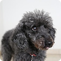 Adopt A Pet :: Charlie *Vision Impaired* D170120:PENDING ADOPTION - Edina, MN