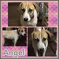 Adopt A Pet :: Angel - Longview, TX