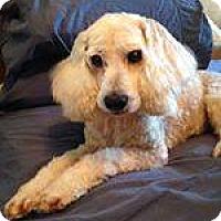 Adopt A Pet :: Fiona - Savannah, GA