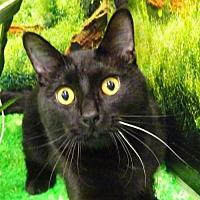 Adopt A Pet :: Chrisney - Forest Lake, MN