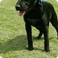 Adopt A Pet :: Matilda - Tower City, PA