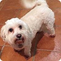 Adopt A Pet :: Bella - San Francisco, CA