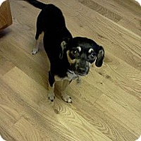 Adopt A Pet :: Pepito - Sheridan, OR