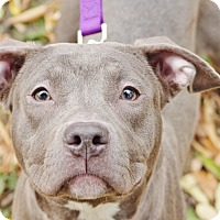 Adopt A Pet :: Izzy - Reisterstown, MD