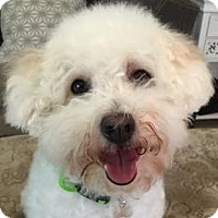 Adopt A Pet :: Dexter - La Costa, CA