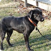 Adopt A Pet :: Venus - Lewisville, IN