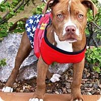 Adopt A Pet :: Bubbers - Gilbert, AZ