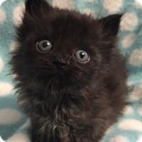 Adopt A Pet :: Storm - Union, KY