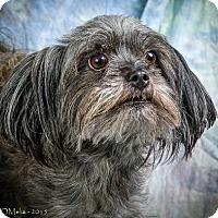 Adopt A Pet :: TOBEY - Anna, IL