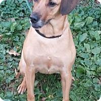 Adopt A Pet :: Piper - Oberlin, OH