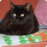 Adopt A Pet :: Florence - Medina, OH