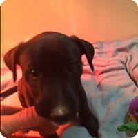Adopt A Pet :: Ember - Houston, TX
