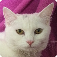 Adopt A Pet :: Whitney - Winchester, CA