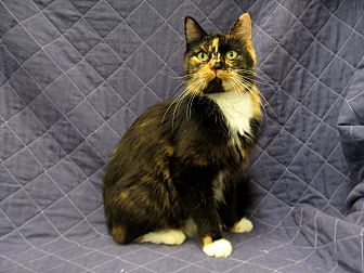 Domestic Longhair Cat for adoption in Redwood Falls, Minnesota - Melody