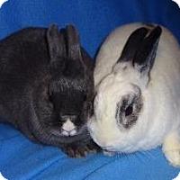 Adopt A Pet :: Sailor - Woburn, MA