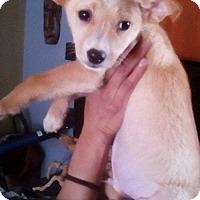 Adopt A Pet :: Charlie - Dana Point, CA