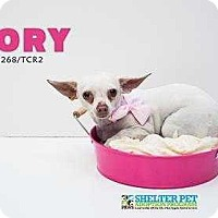 Adopt A Pet :: Dory - San Angelo, TX