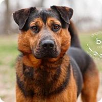 Adopt A Pet :: Bear - Kansas City, MO