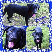 Adopt A Pet :: Bubba-pending adoption - Manchester, CT