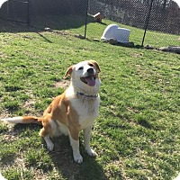 Adopt A Pet :: Buddy - Sparta, NJ