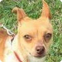 Adopt A Pet :: Doris - Lexington, KY