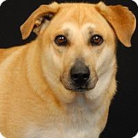 Adopt A Pet :: Dixie - Newland, NC