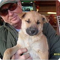 Adopt A Pet :: Rosco - Glastonbury, CT