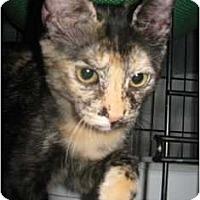 Adopt A Pet :: Gretta - Lunenburg, MA