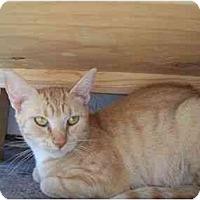Adopt A Pet :: Sweet Pea - El Cajon, CA