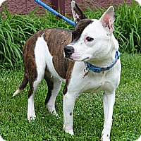 Adopt A Pet :: Lady - Springfield, IL