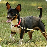 Adopt A Pet :: Sabastian - Staunton, VA