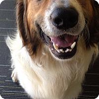 Adopt A Pet :: Tramp - Somers, CT