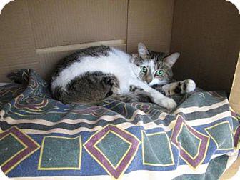 Domestic Shorthair Cat for adoption in Cumming, Georgia - Bella