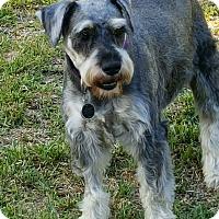 Adopt A Pet :: Rocky - Cerritos, CA
