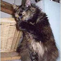 Adopt A Pet :: Celia - Pasadena, CA